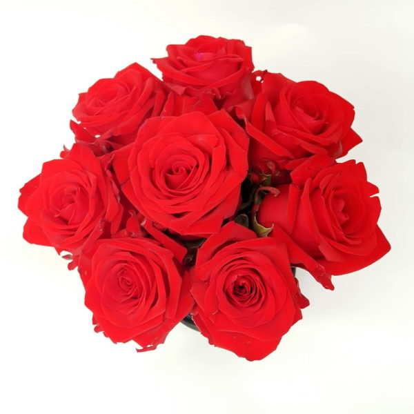 Flower box maly czerwona roza widok z gory