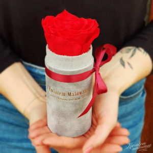 Flower Box Mini Szary Flokowany z czerwoną różą trzymany w ręku Poczta Kwiatowa Kwiatem Malowane
