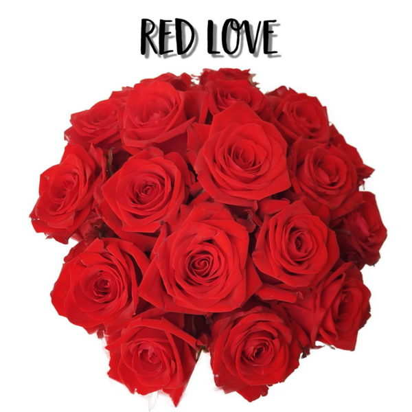 Róże koloru Red - Czerwone
